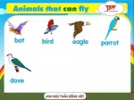 Animals that can fly