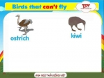 Birds that can't fly